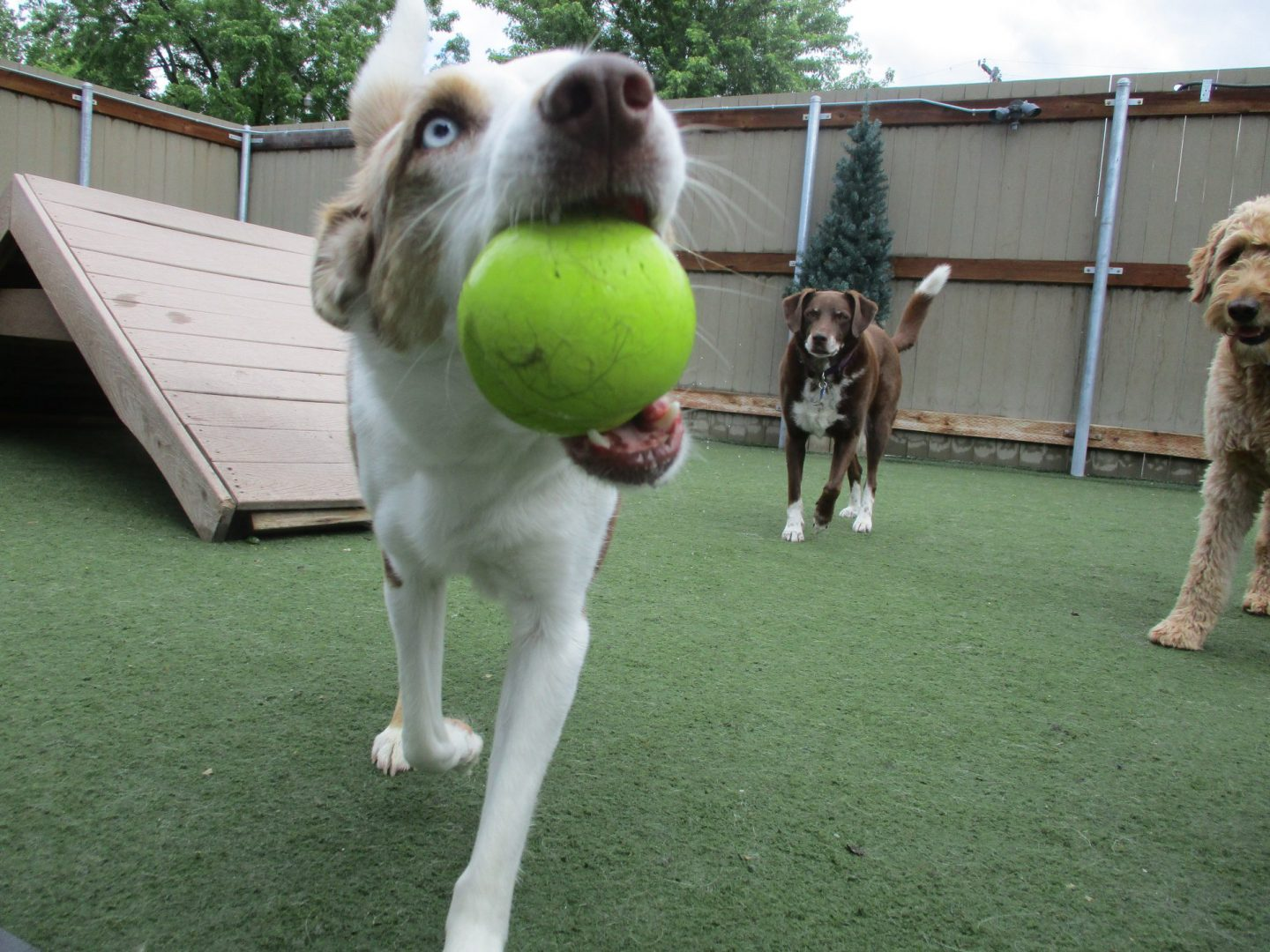 Quick Paws | Missoula's best dog walking, boarding, grooming
